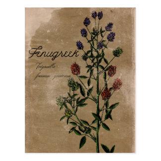 Carte postale vintage d'herbe de fenugrec de style