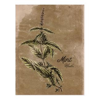 Carte postale vintage d'herbe de menthe de style