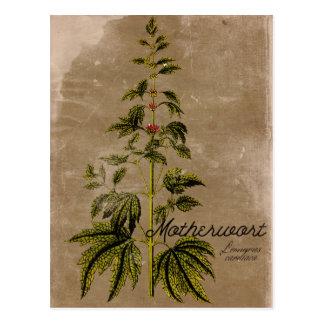 Carte postale vintage d'herbe de Motherwort de
