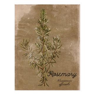 Carte postale vintage d'herbe de Rosemary de style