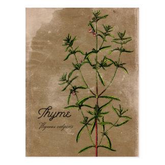 Carte postale vintage d'herbe de thym de style