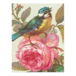 Carte postale vintage d'oiseau