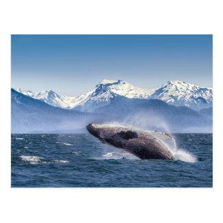 Carte Postale Violation de la baleine de bosse en Alaska