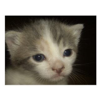 Carte Postale Visage adorable de chaton