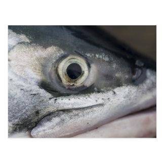 Carte Postale Visage de saumon argenté