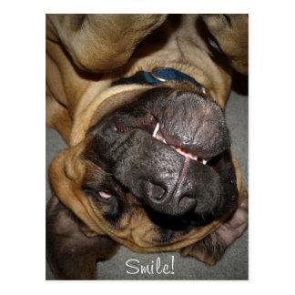 Carte Postale Visage heureux - photo anglaise drôle de chien de