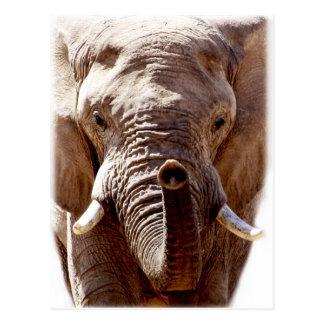 Carte Postale Visage sauvage d'animal de tête d'éléphant de