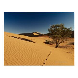 Carte Postale voies dans le paysage de désert de Namib à
