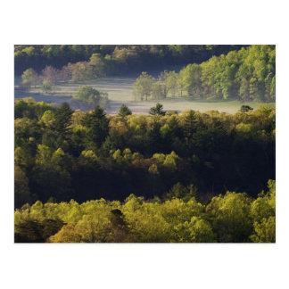 Carte Postale Vue aérienne de forêt dans la crique de Cades,