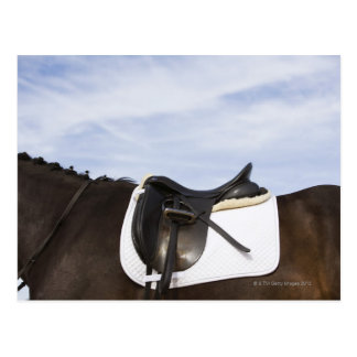 Carte Postale vue de côté de cheval sellé