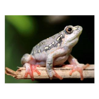 Carte Postale Vue de côté de grenouille sur le roseau
