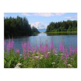 Carte Postale Vues de fireweed d'Amalga