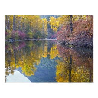 Carte Postale WA, réserve forestière de Wenatchee, crique de