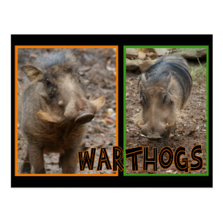 CARTE POSTALE WARTHOGS - ANIMAUX SAUVAGES