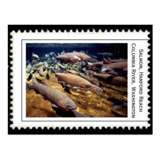 Carte Postale Washington saumoné