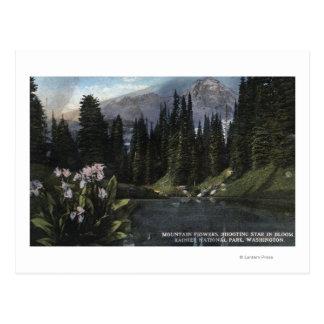 Carte Postale Washington - un parc national plus pluvieux, Sta