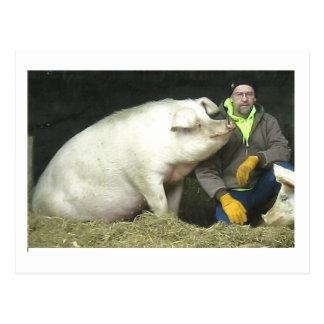 Carte Postale Winston le porc