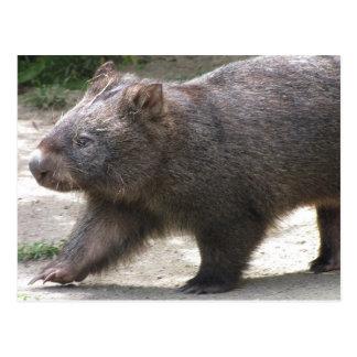 Carte Postale Wombat
