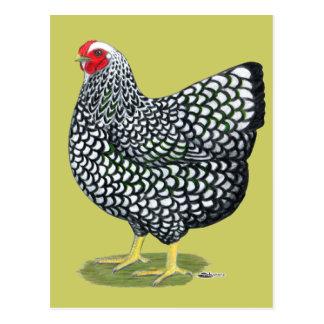 Carte Postale Wyandotte :  poule Argent-lacée