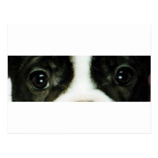 Carte Postale yeux brindle et blancs de bouledogue français