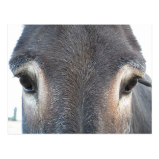 Carte Postale Yeux d'âne