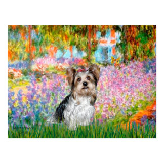 Carte Postale Yorkshire Terrier (Biewer) - jardin