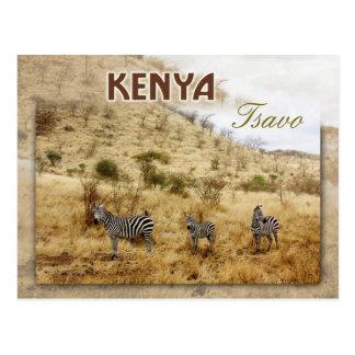 Carte Postale Zèbres dans Tsavo, Kenya
