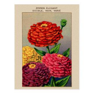Carte Postale Zinnia français vintage Zinnas de paquet de graine