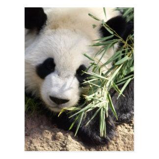 Carte Postale Zoo Atlanta d'ours panda @