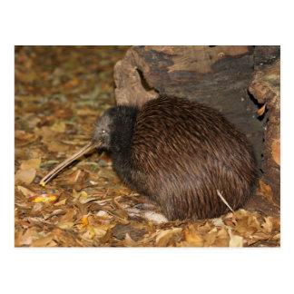 Carte Postale Zoo d'Auckland de cool de kiwi @