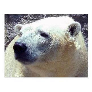 Carte Postale Zoo de Nikita Kansas City de plan rapproché de