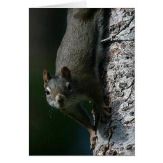 Carte pour notes 1 d'écureuil