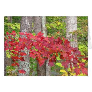 Carte pour notes d'automne