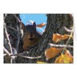 Carte pour notes d'écureuil