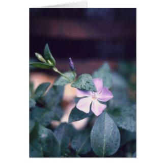 Carte pour notes pourpre de fleur de Vinca