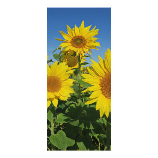 Carte Publicitaire tournesol dans la fleur colorée d'été de ciel bleu