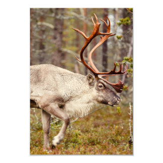 Carte Renne marchant dans la forêt