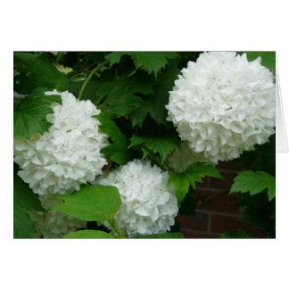 Carte ronde blanche de fleurs d'allium
