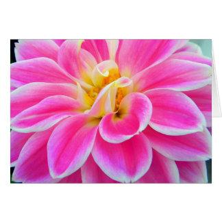 Carte rose de dahlia