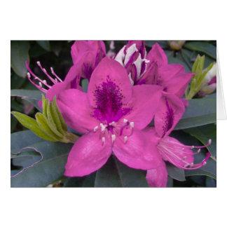 Carte rose de rhododendron