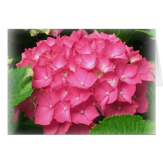 Carte rose d'hortensias