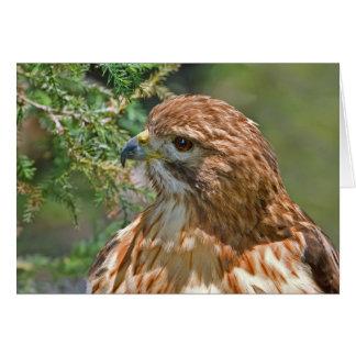 Carte Rouge-Épaulée de faucon