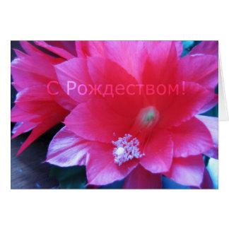 Carte russe de Joyeux Noël, cactus de Noël