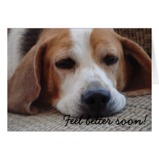 Carte : Sensation de beagle meilleure bientôt