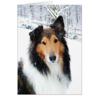 Carte tricolore de colley de neige