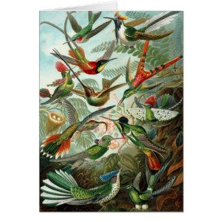 Carte tropicale d'oiseau de ronflement