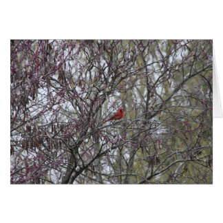 Carte vierge cardinale