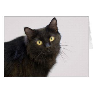 Carte vierge de chat noir par le foyer pour une