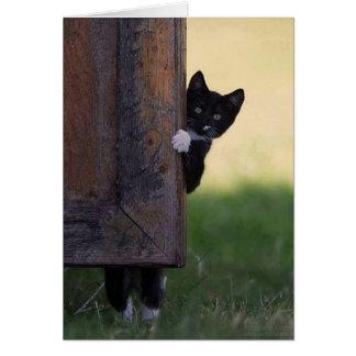 Carte vierge de chat - sympathie, merci,