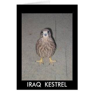 CARTE VIERGE DE CRÉCERELLE DE L'IRAK